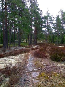 skogen20161